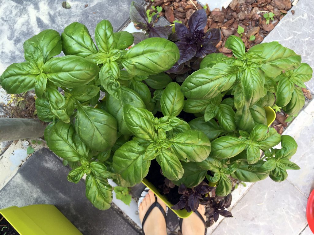 Just look at this Basil !!!! ;)
