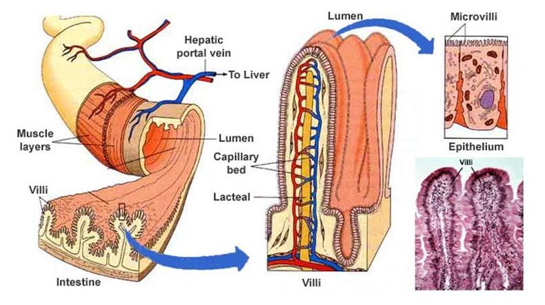 Healing Your Gut - The Histamine Friendly Kitchen